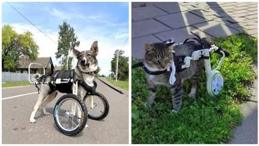 Другий шанс на життя: українська компанія виготовляє інвалідні візки для травмованих тварин
